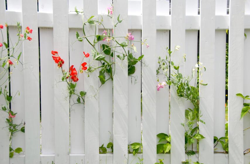 hàng rào đẹp mẫu 2