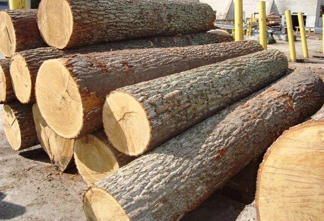 gỗ bằng lăng