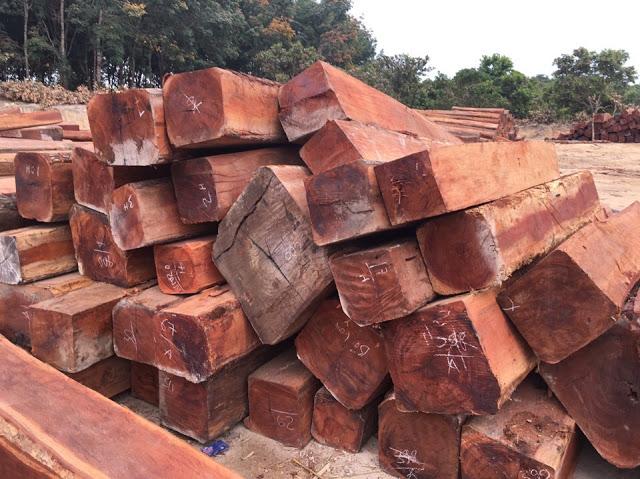 cây gỗ kiền kiền