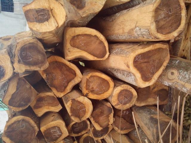 gỗ muồng đen (skyhome.vn)